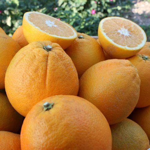 apelsinai-c