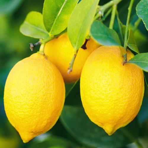 citrinos-c